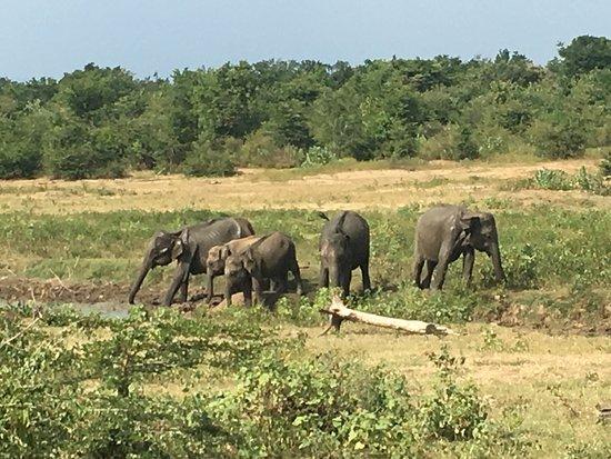 Uda Walawe National Park, Sri Lanka: Great experience and was nice to see a lot of elephants, crocodile and birds