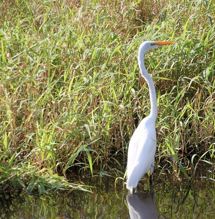 Cocoa, Floride : Egrets and lots of other birds!