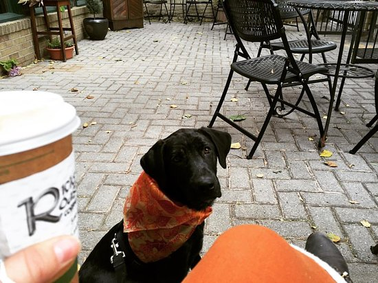 Martinsburg, WV: dog-friendly courtyard where you can enjoy your coffee & a little downtown people watching ;)