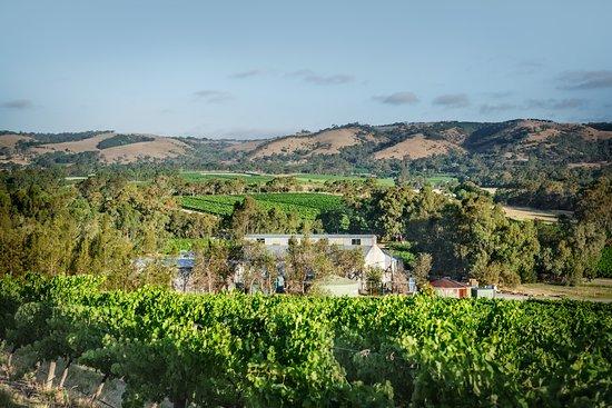 Shottesbrooke Vineyards