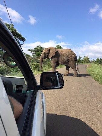 Umdloti, Sudáfrica: Elephant Crossings