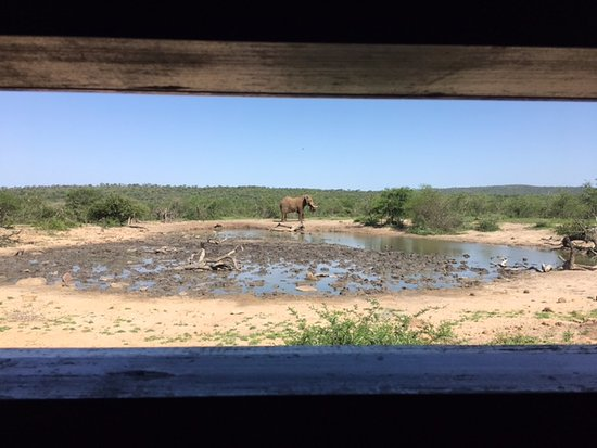Umdloti, South Africa: Elephant Sightings