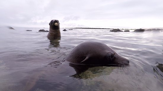 San Cristobal, Ecuador: Playful young sea lions