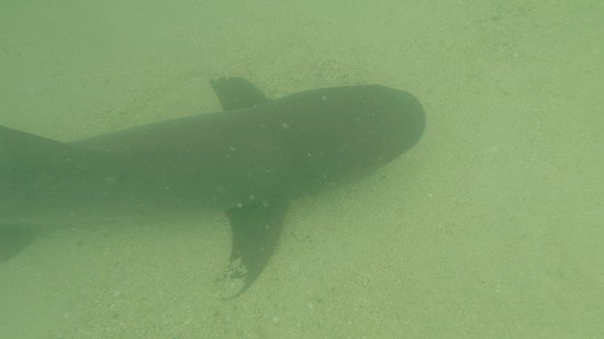 San Cristobal, Ecuador: Swimming with the sharks in Tortuga bay
