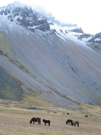 Hofn, Iceland: Wild horses near Vestrahorn