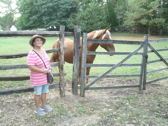 Clarkesville, GA: This is a real talking horse...Wilbur......
