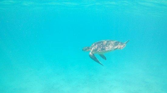Kapalua, Hawaje: floating around