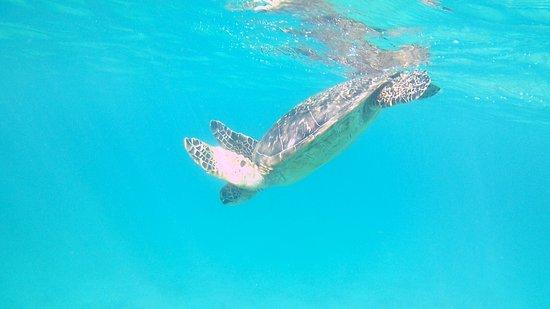 Kapalua, Hawaje: heading back down