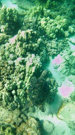 Kapalua, Hawaje: cruising