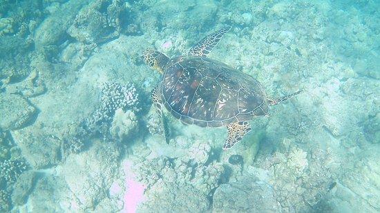 Kapalua, Hawaje: turtle