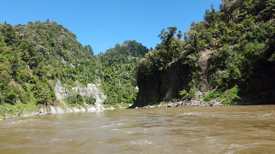 Whanganui, Nuova Zelanda: Native bush on each side