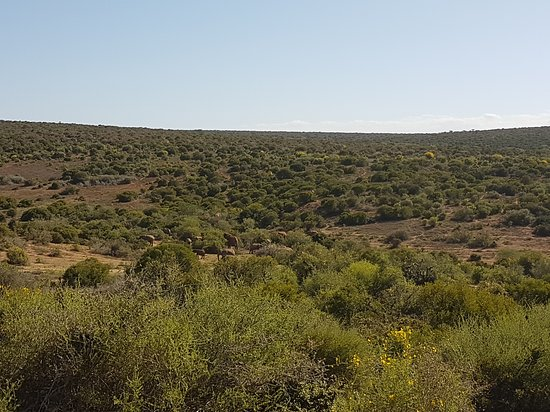 Addo Rest Camp: 20170114_161241_large.jpg