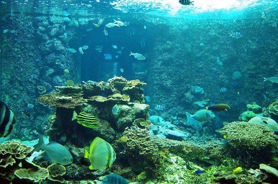 Kushimoto Marine Park Aquarium: 串本の生き物だけを約400種4000匹