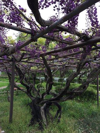 Suga Garden
