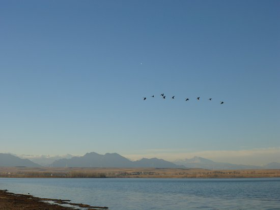 Westminster, CO: Squadron Formation of Canadian Geese