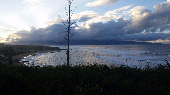 Paia, Hawái: solo tree