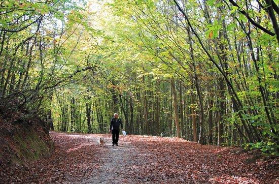 Polonezkoy Tabiat Parki