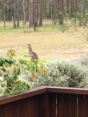 Pokolbin, Australien: photo4.jpg