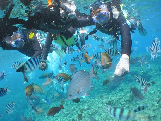 Yomitan-son, Japón: Best snorkeling experience with instructor Mamo and Voice Plus in Okinawa