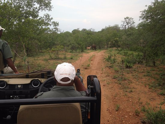 Garonga Safari Camp: Tracking