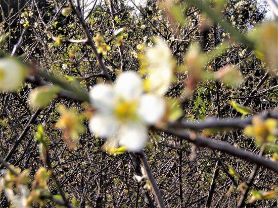Taoyuan, Taiwan: 朵朵梅花迎寒冬