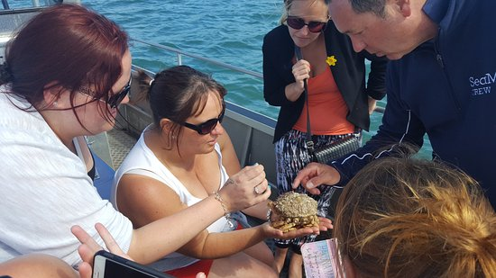 New Quay, UK: Our spider crab lesson