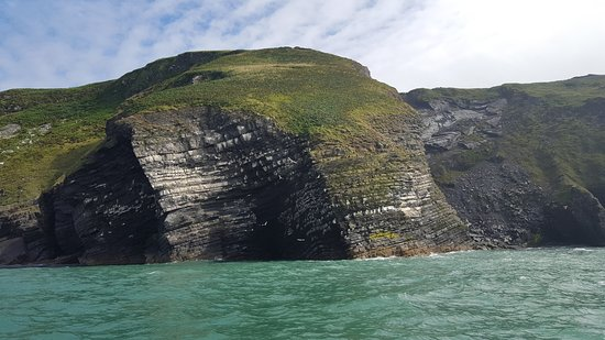 New Quay, UK: Dramatic cliffs with lots of birds