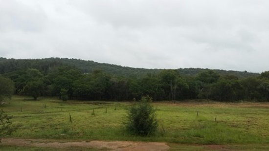 Hekpoort, Sudáfrica: Forest near the river