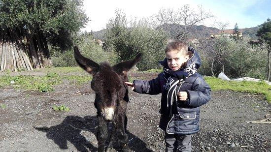 Linguaglossa, Italia: Vi presentiamo l'ultima arrivata ...natalina