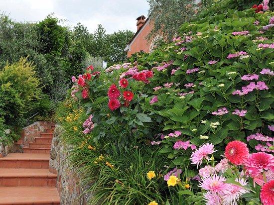 Capannori, Italy: Flowers in Villa La Volpe