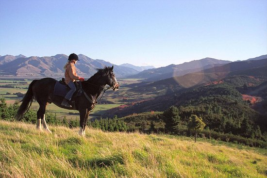 Hanmer Springs, Nuova Zelanda: Hanmer Horses