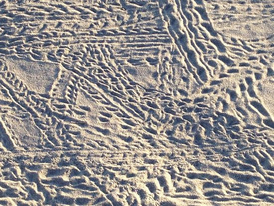 Playa Samara, Costa Rica: Patterns in the sand made by the little feet of ?