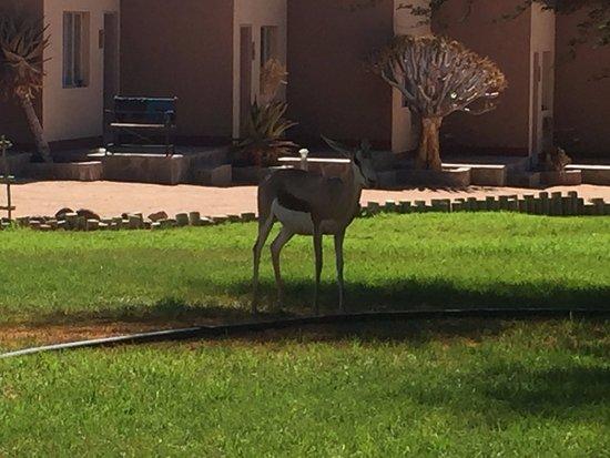 Sesriem, Namibia: Springok!