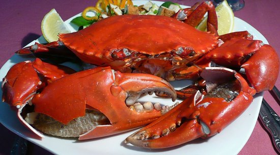 crabe picture of crab sea food restaurant trincomalee tripadvisor