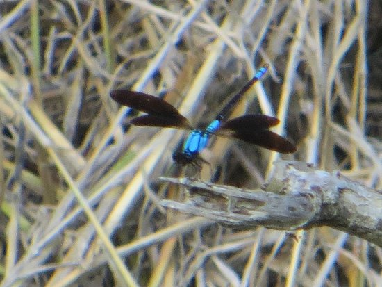 Ravenshoe, Australia: sapphire hovermaster