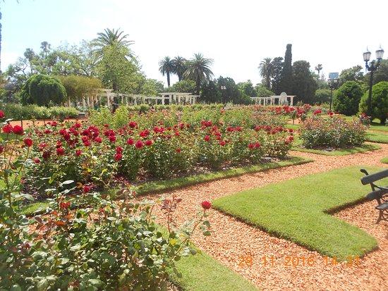Manutenzione giardini giardinaggio come tenere in ordine il