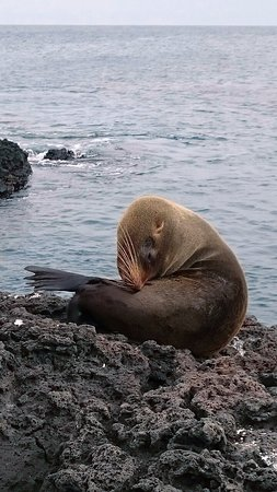 Puerto Villamil, Ecuador: Sea lion