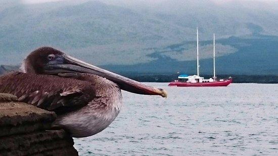 Puerto Villamil, Ecuador: The beauty giant birds welcome you to the islands