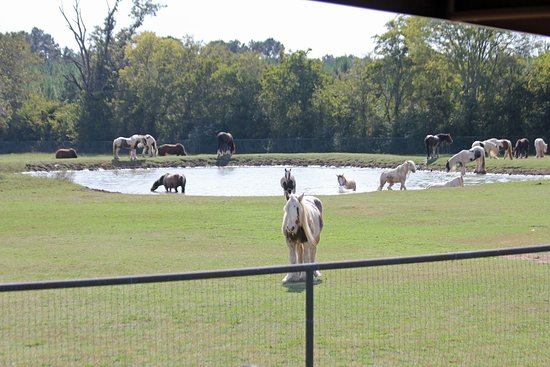 Huntsville, TX: Summertime Fun at the Ranch!
