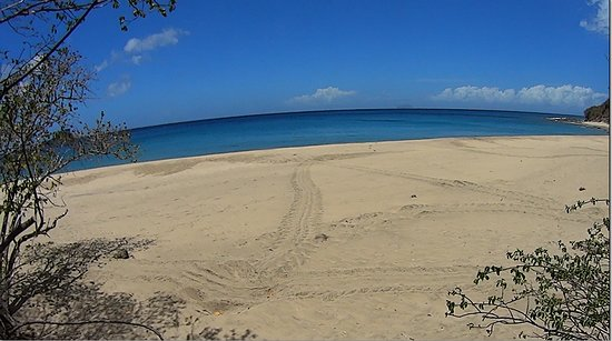 Μοντσεράτ: Beautiful unspoiled white sand beach with Fresh turtle tracks