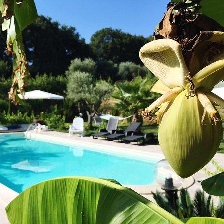 Acquaviva Picena, Italien: La nostra pianta di banano, sullo sfondo la piscina