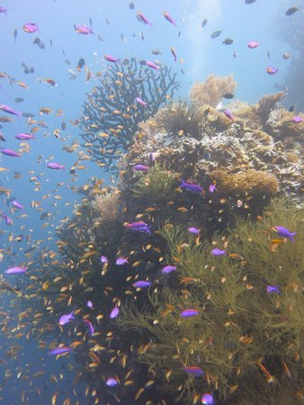 Southern Leyte Province, Philippines: Southern Leyte Divers