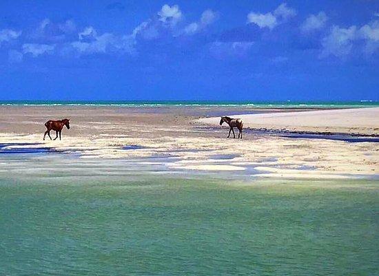 Ilha de Itamaraca, PE: VIsta de uma das piscinas formada na maré baixa
