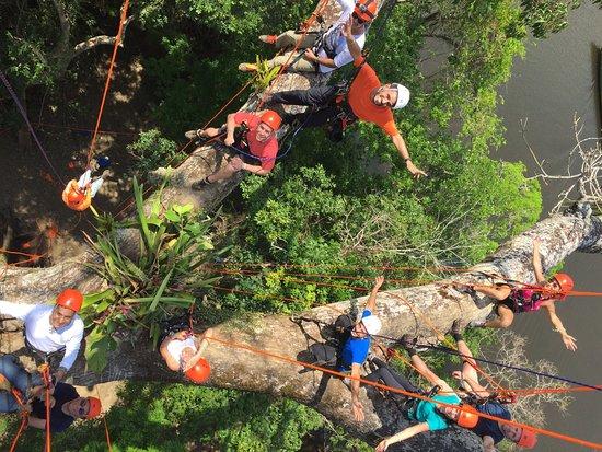 Amazon Tree Climbing