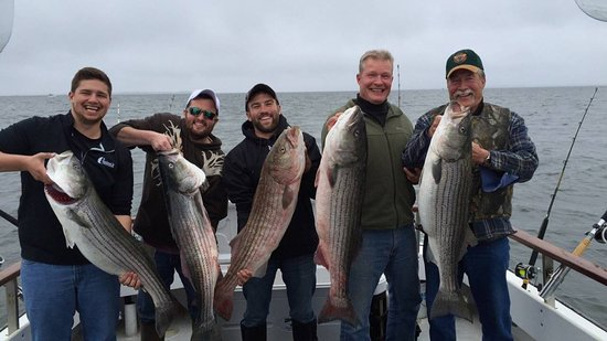 Stevensville, MD: Large Striped Bass on the Bay