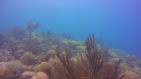 Divers Republic: Reef Playa Daaibooi