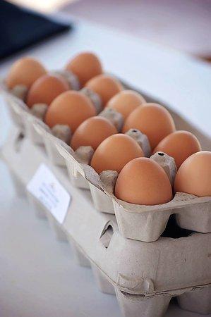 Nolensville, TN: Farm Fresh Eggs