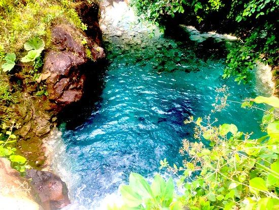 Rincon de La Vieja, Kostaryka: Jaguar