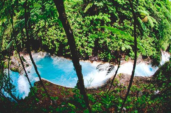 Rincon de La Vieja, Kosta Rika: Jaguarundi