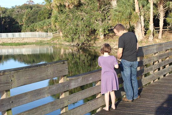 DeBary, Floryda: Critter watching from the boardwalk